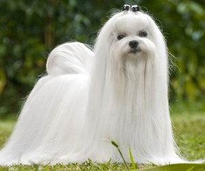 Peluquería canina a domicilio en Terrassa