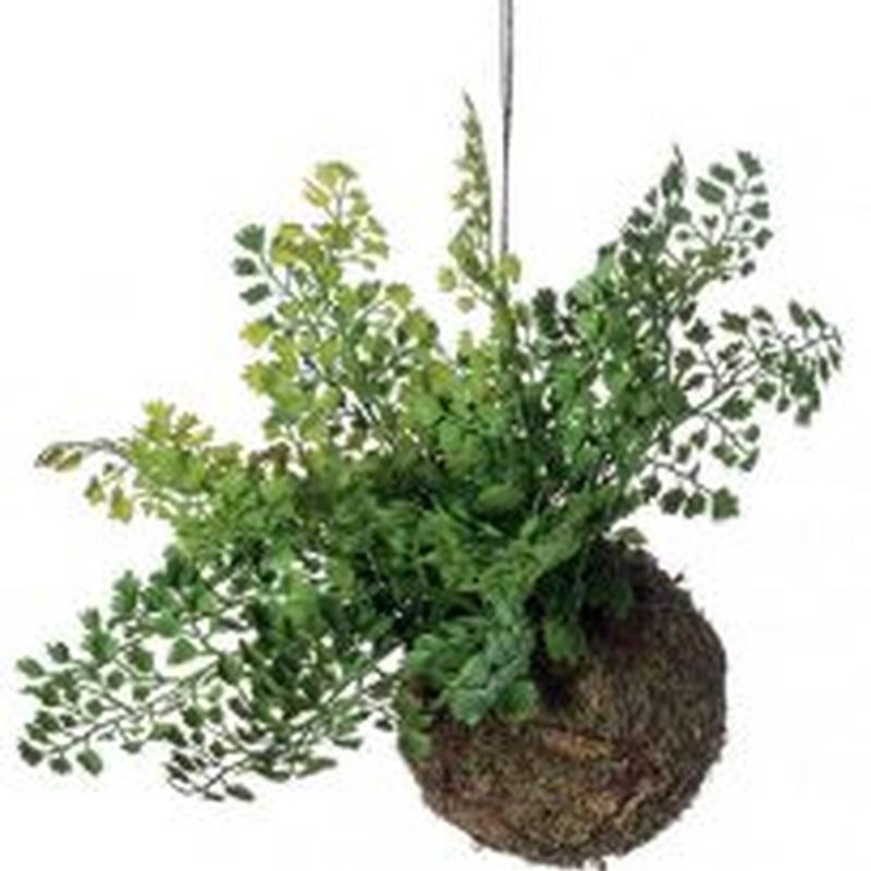 Planta decorativa techo 419165: ¿Qué hacemos? de Ches Pa, S.L.