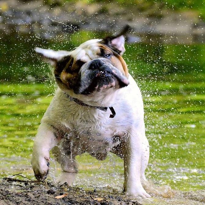 Cuidados básicos para un perro feliz y sano