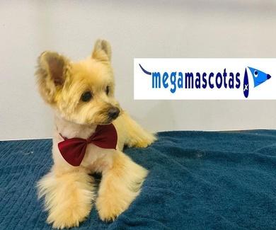 Megamascotas te ofrece un multiservicio  para atender  a tu mascota