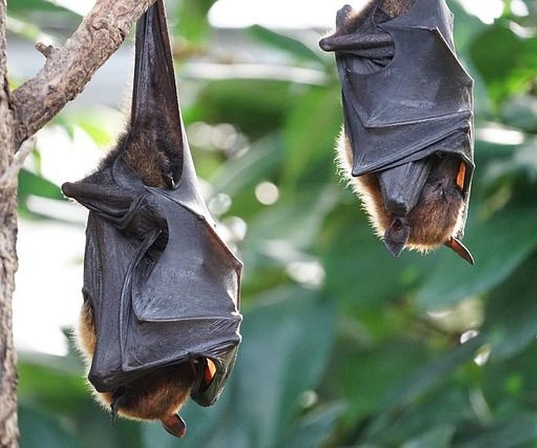 ¿Murciélagos? También pueden invadirte