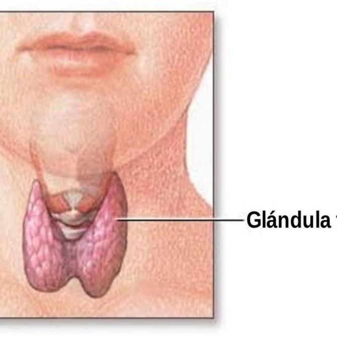 El papel del yodo en la tiroides