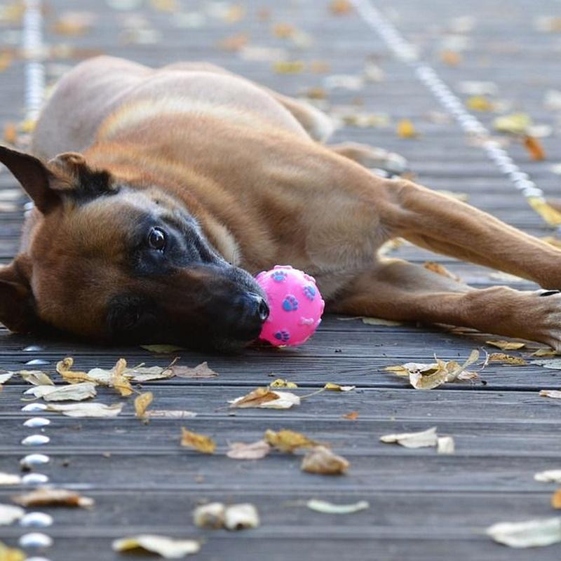 Juguetes: Productos y Servicios de Mundo Mascota
