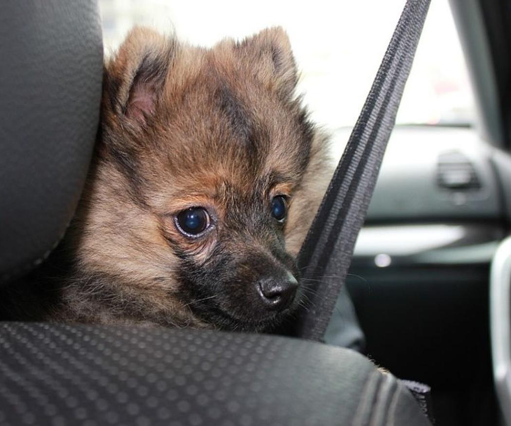 Consejos para cuando lleves a tu perro de viaje