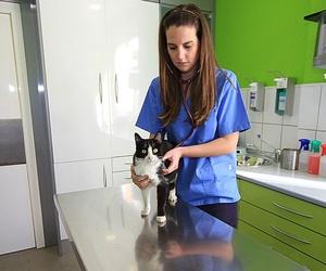 Clínica veterinaria en Torremolinos