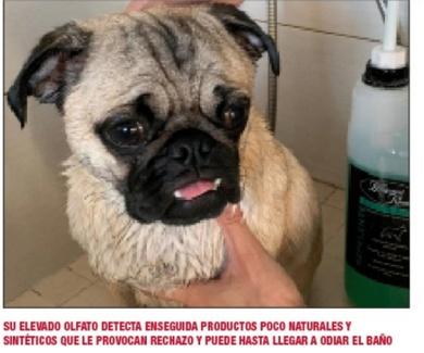Cualquier producto no sirve para bañar a tu perro