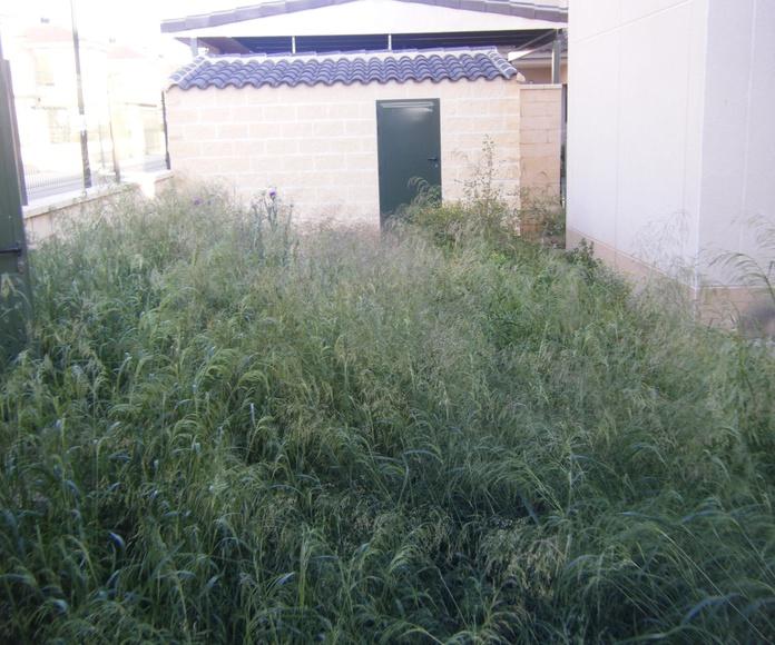 Proyecto paisajismo Ches Pa, antes/después y pasados los años en jardín particular.......Antes.