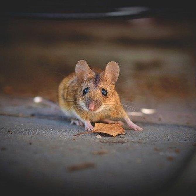 Rincones de tu casa con ratones