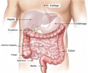 Especialista en el aparato digestivo