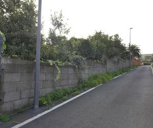 Camino Santa Ana - La Laguna