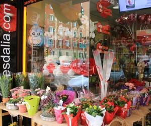 Plantas y flores en floresdalia.com