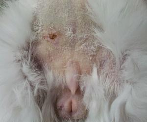 Aspecto de la piel del vientre y periné