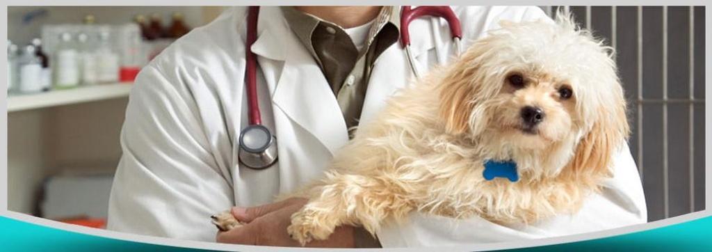 Homeopatía veterinaria en Alcalá de Guadaíra | Clínica Veterinaria Oromana Rosa Medina