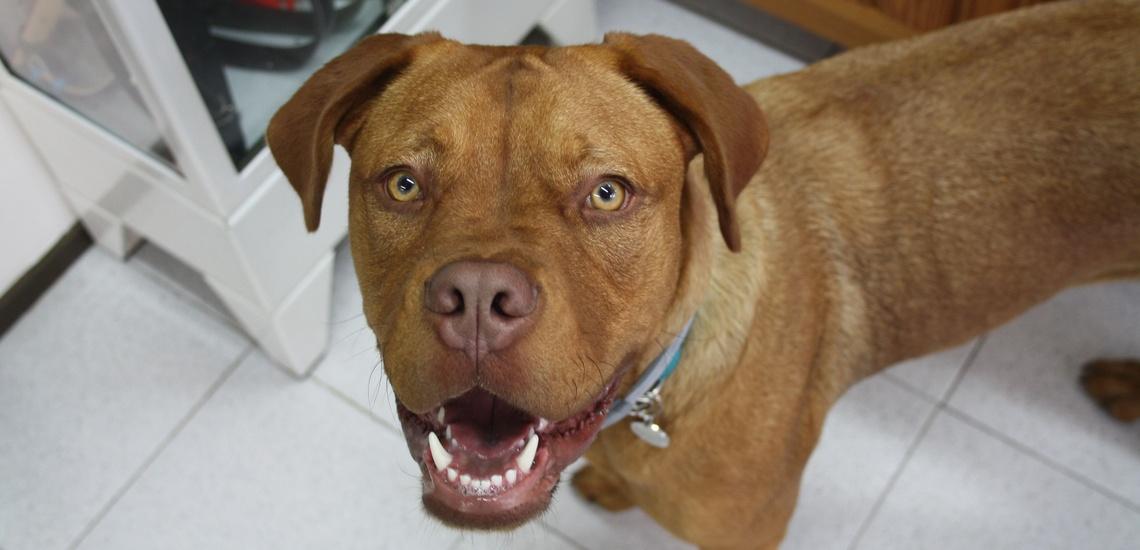 Peluquería canina en Alella para dejar guapa a tu mascota