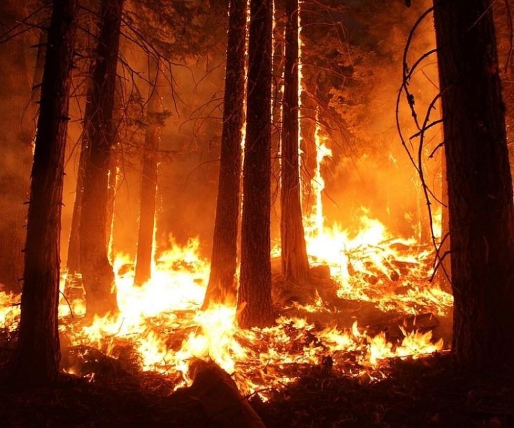Consejos para evitar incendios forestales