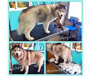 Llevando nuestra mascota a la peluquería
