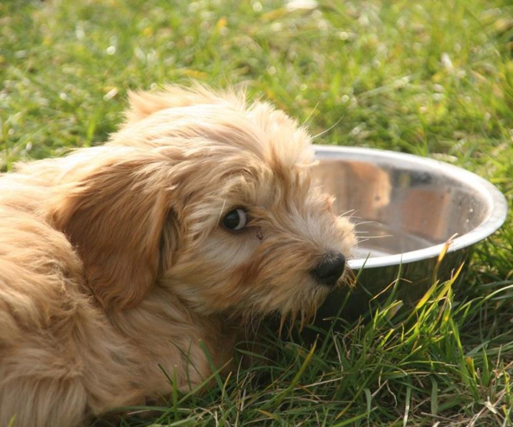 La necesidad de darle el pienso adecuado para él a tu cachorro