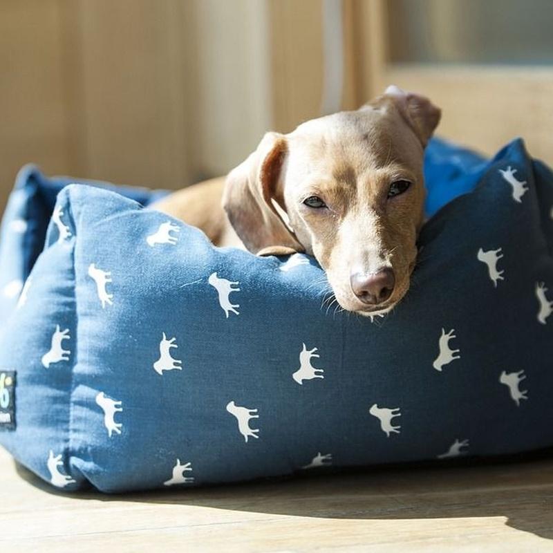 Confort: Productos y Servicios de Mundo Mascota