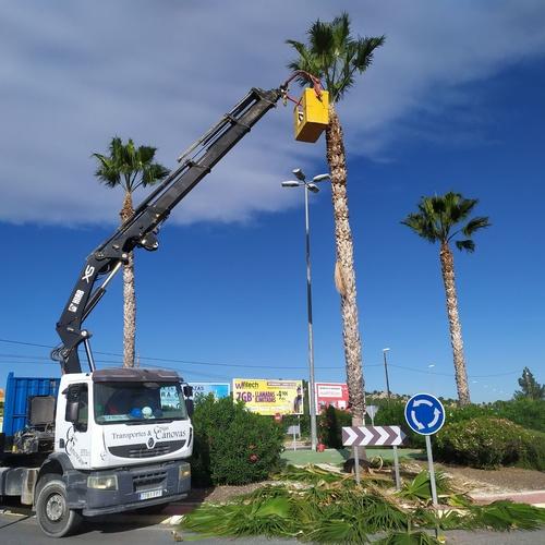 Diseño y mantenimiento de jardines en Murcia | Grupo Cánovas Jardinería