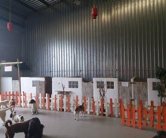 Guardería: Servicios de Centro Canino Oxican