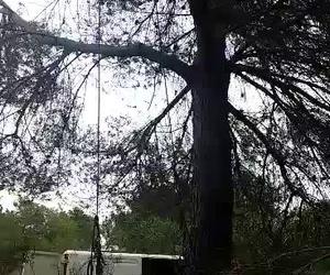 Demostración acceso al árbol en cuerda simple y descenso en cuerda doble