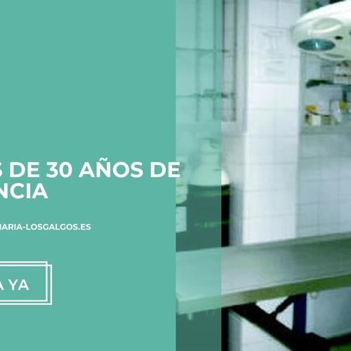 Análisis clínicos veterinarios en Las Palmas