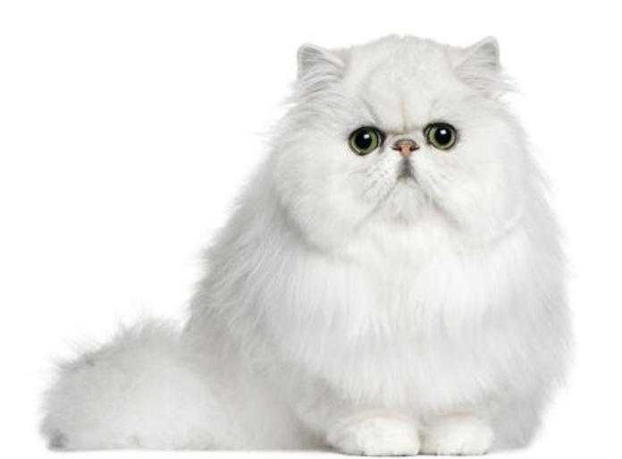 Estética felina Sants: Productos y servicios  de Grans Peluts