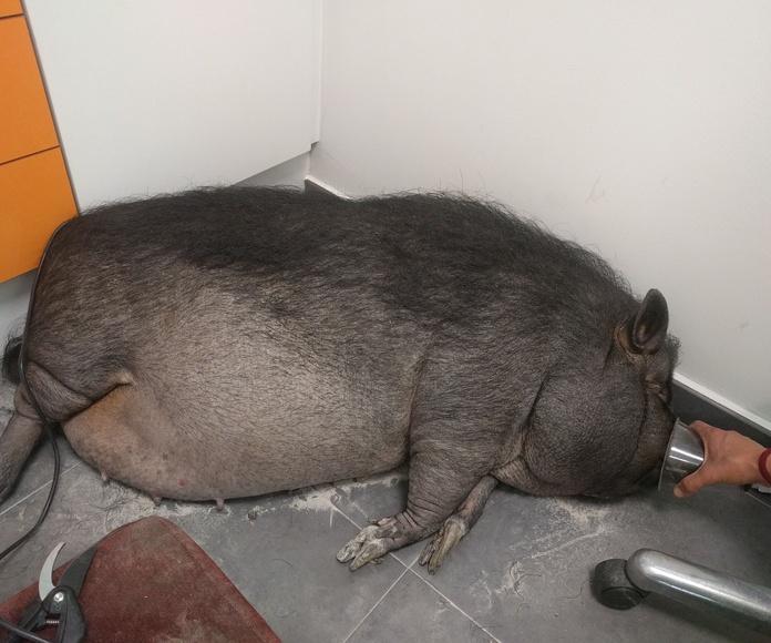 Veterinario animales exoticos Valencia