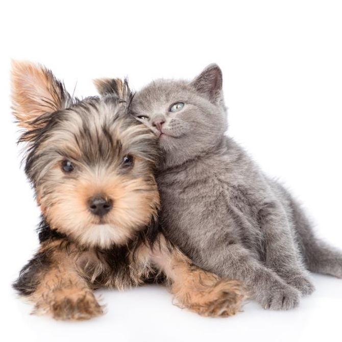 Mascotas vacunadas, mascotas felices
