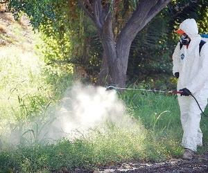 Eliminación de plagas y suciedad en lugares públicos