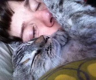 Las urnas y recuerdos: Servicios de Sistema Integral de Mascotas - SIM