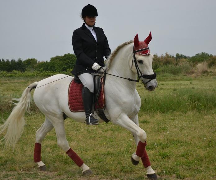 Clases de equitación: Servicios de Hípica Riding School