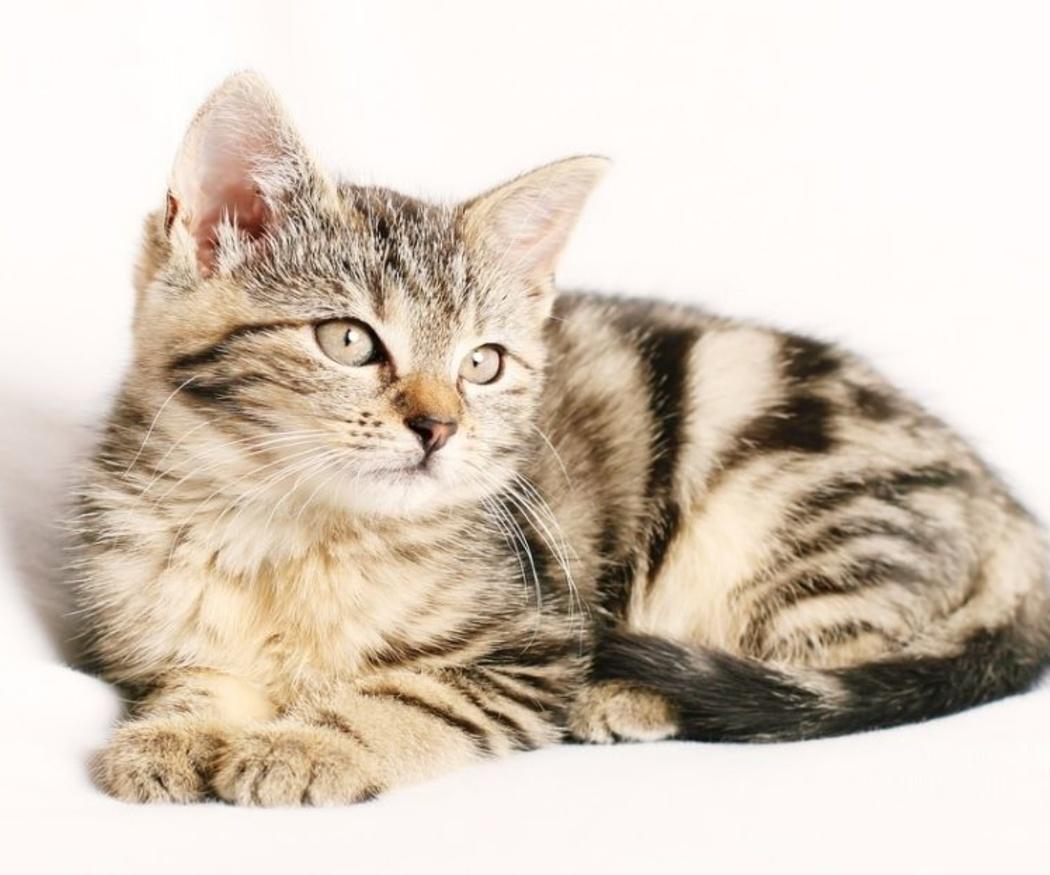 ¿Necesita mi gato algún suplemento alimenticio?
