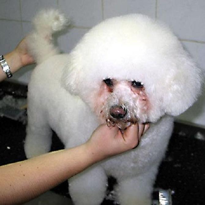 ¿Por qué debemos llevar a nuestro perro a la peluquería?