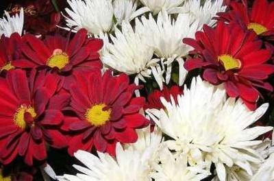 Flores y plantas: De La Hoz Viveros