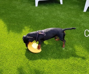 Otto, disfrutando de su nuevo jardín, donde va a ser muy muy felíz