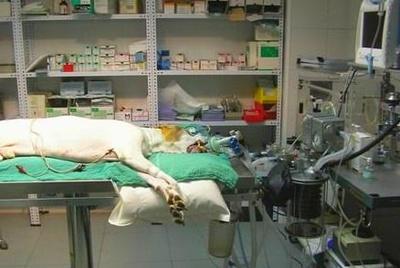 Todos los productos y servicios de Veterinarios: Clínica Veterinaria San Antonio
