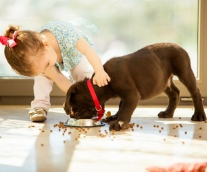 Que no le falte su comida a tu cachorro