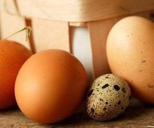 Mayorista de huevos para hostelería y alimentación en El Maresme