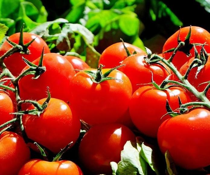 Tomates: Productos de Frutas Pablos