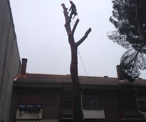 Tala de árboles en altura en Torrelodones