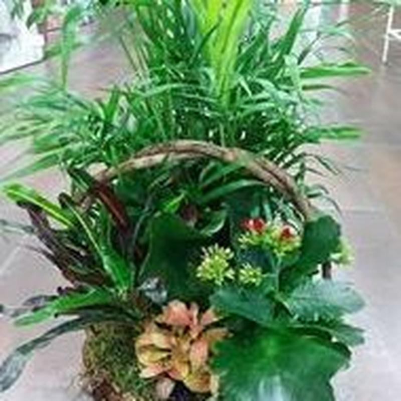 composición de plantas de interior