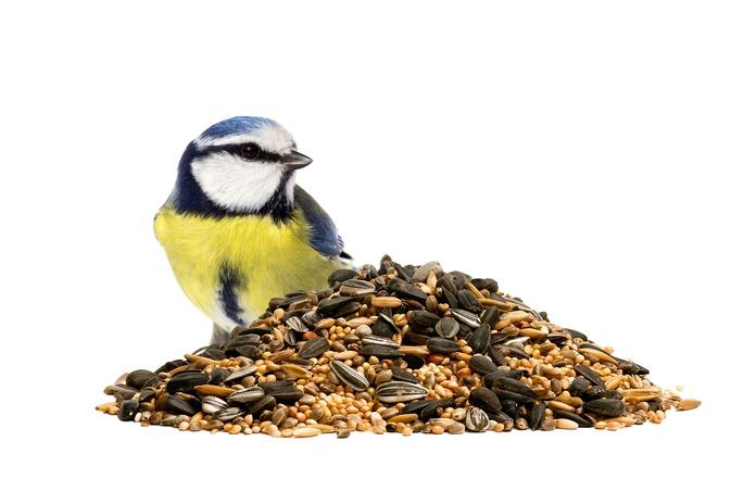 Comida para aves: Productos y servicios de Floristería Miranda