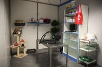 Canitas: urgencias veterinarias en Huelva