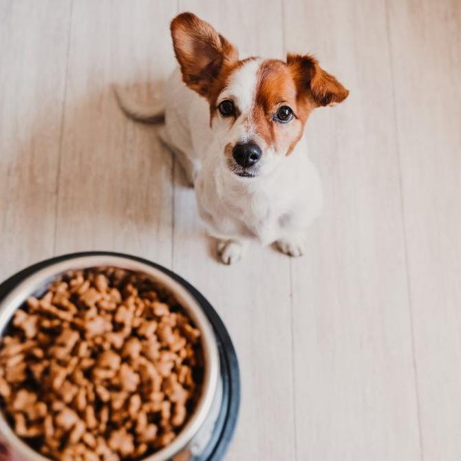 ¿Por qué un cachorro necesita un pienso especial?