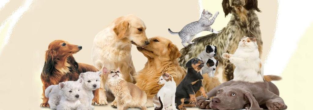 Clínicas veterinarias en Arrecife | Clínica Veterinaria Timanfaya