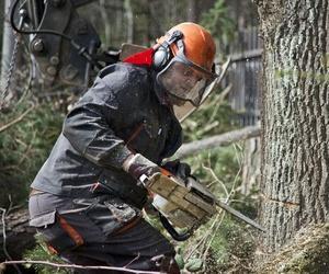 Poda y tala de árboles en Pontevedra