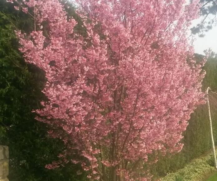 Decoración floral: Servicios de Jardinería IGLE-MAN