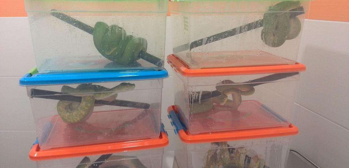Veterinarios de urgencias para conejos en Boadilla del Monte: