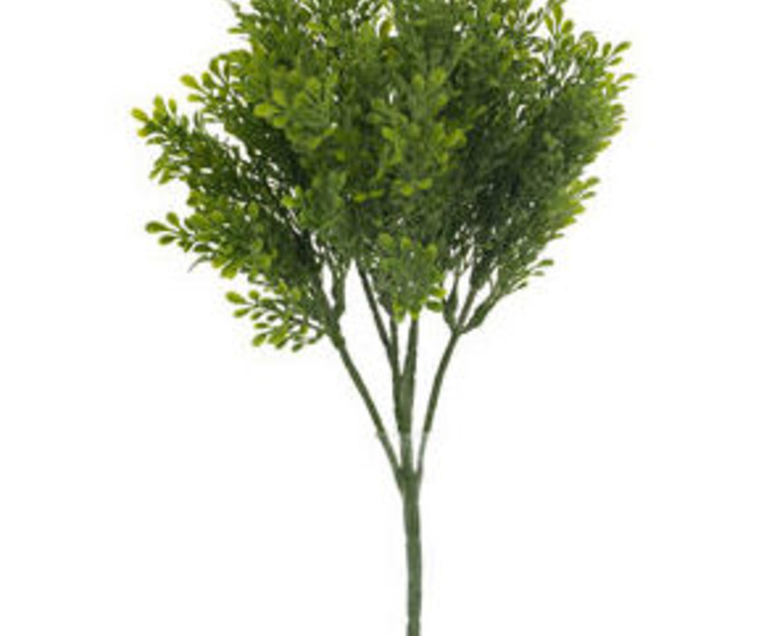 Mata Mini Boxwood X6-96